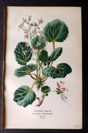 Step 1896 Antique Botanical Print. Creeping Sailor 87